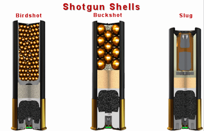 Types of Shotgun Shells Birdshot, Buckshot, Slug